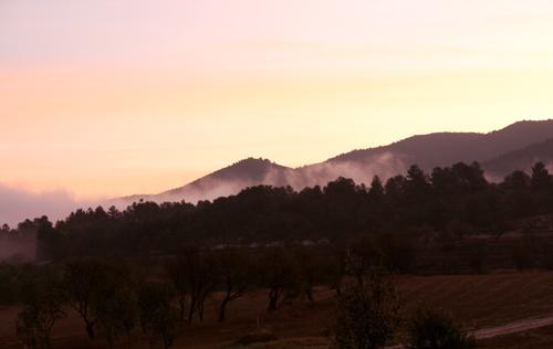 dawn 1 LG