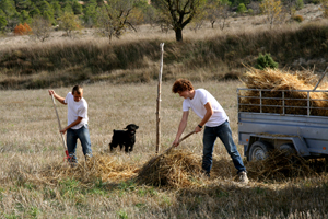 lloya & romaine collecting straw