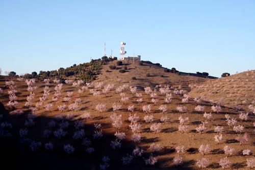 almond blossom:telecoms